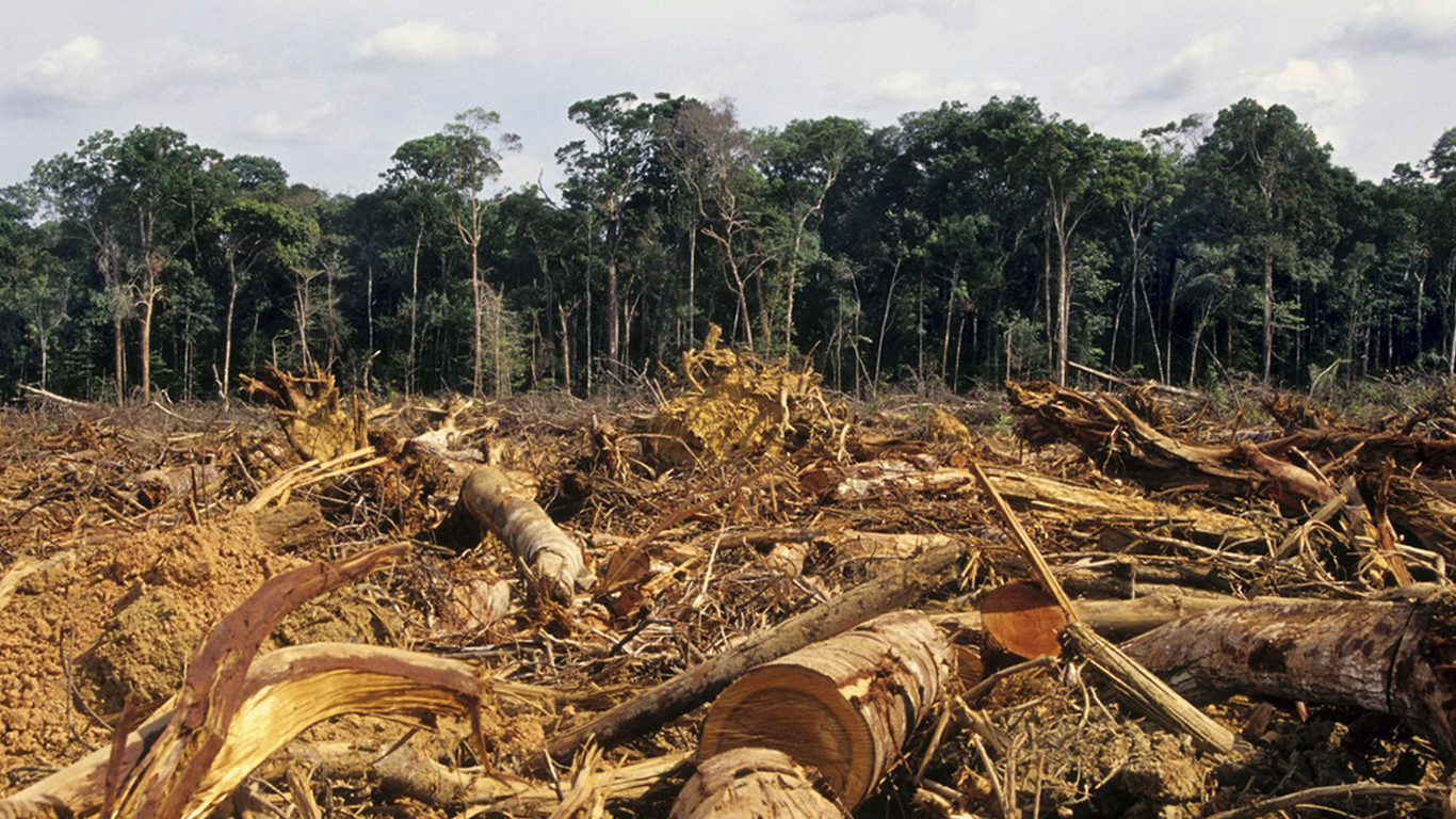 10 dangers of deforestation But there is a common perception that deforestation is harmful for our eco-system but the scientist say that it is somewhat beneficial too the process of deforestation possesses both advantages and disadvantages advantages of deforestation the first benefit is that, as a result of deforestation, communities are being able to set up their homes.
